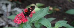 butterflies! 128