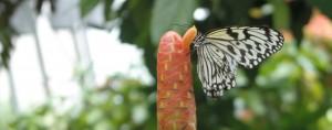butterflies! 136
