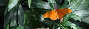 butterflies! 182